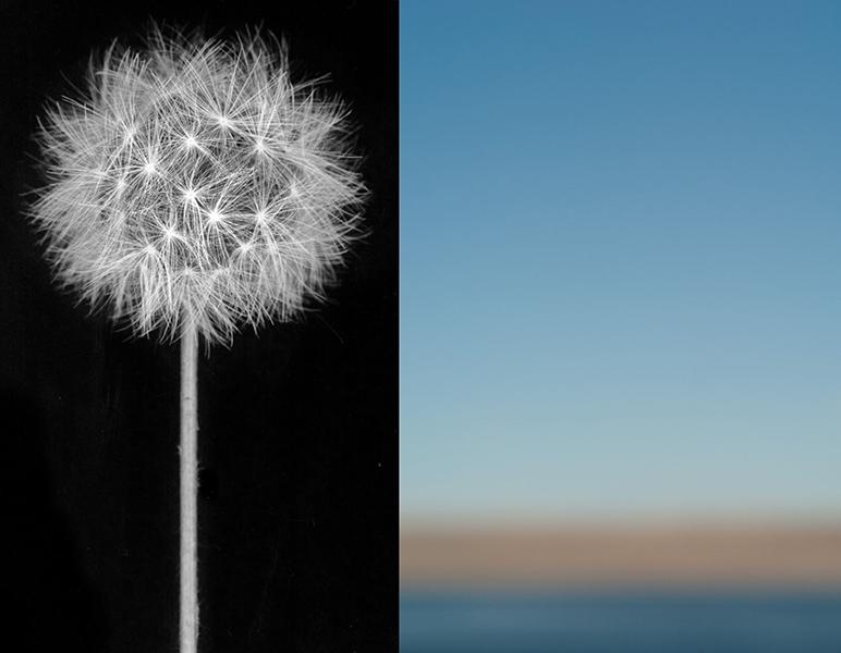 Fine Art Photography by Brenda Biondo