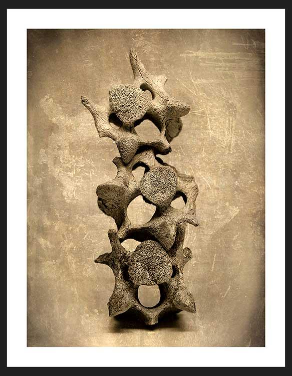 Vertebrae | Humanitou Fine Art Photography