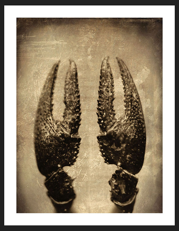 Crawfish II, Reverence Collection | By Adam Williams