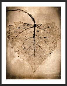 Leaf, Reverence Collection | Fine Art Photography by Adam Williams