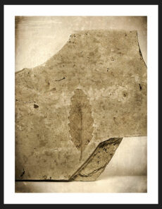 Leaf Fossil, Reverence Collection | Fine Art Photography by Adam Williams