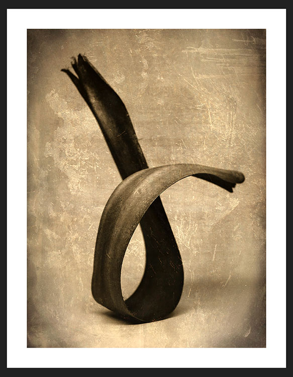 Palm Leaf, Reverence Collection | Fine Art Photography by Adam Williams