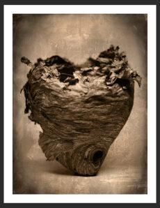 Hornet Nest | Reverence Art Photography by Adam Williams