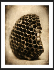 Wasp Nest | Reverence Art Photography by Adam Williams